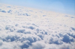 Вылетевший из Новосибирска самолет столкнулся с коршуном