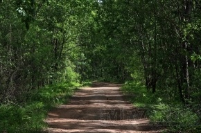 В Приморском районе планируют создать заказник «Новоорловский»