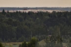 Свалка недалеко от Парголово вознеслась выше деревьев