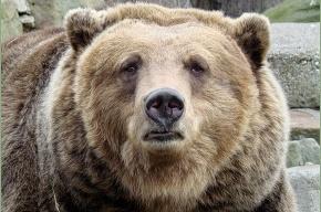 Медведь на Камчатке задрал двух туристов