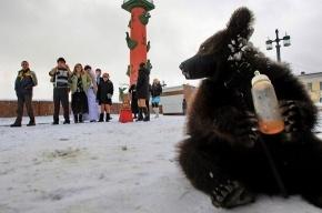 Зоозащитники требуют запретить фотографов со зверями