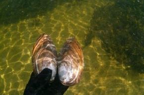 Медведев выложил подводное фото