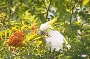 В лесу Ленобласти живет попугай