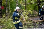 В Ольгино пожарные вовремя удалили нависшее над дорогой дерево: Фоторепортаж