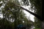 Фоторепортаж: «В Ольгино пожарные вовремя удалили нависшее над дорогой дерево»