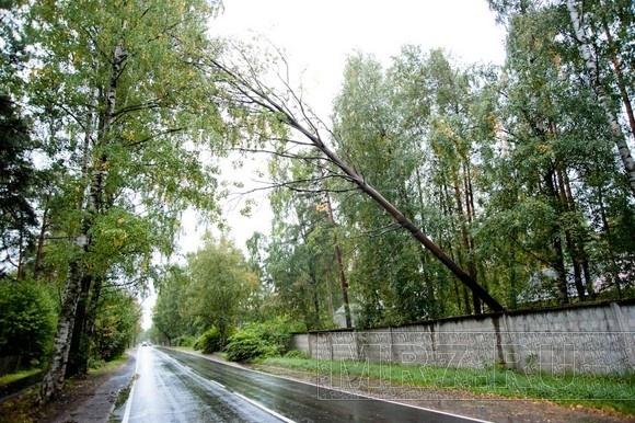 В Ольгино пожарные вовремя удалили нависшее над дорогой дерево: Фото