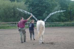 Жители Красносельского района увидят настоящую крылатую лошадь