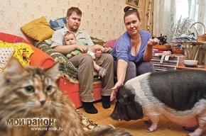 Свинья дома — мусорка не нужна