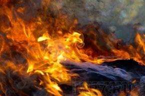 Пожар на Петроградке устроил убийца, заметая следы