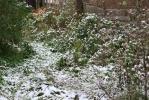Фоторепортаж: «В Ленобласти уже лепят снеговиков»