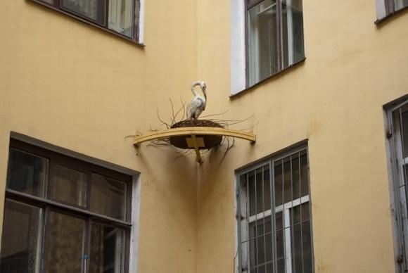 Жители Центрального района Петербурга соревнуются в благоустройстве дворов: Фото