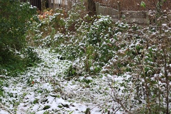 В Ленобласти уже лепят снеговиков: Фото