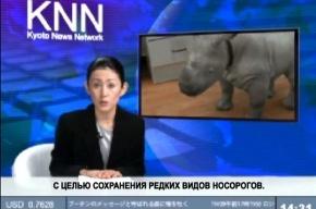 Японцы вывели домашнего носорога