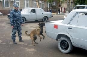 У кого из петербургских полицейских лучший нюх