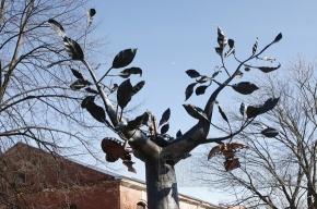 В Приморском районе посадят Дерево жизни
