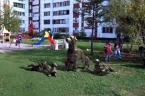 Прохорова просят оплатить установку скульптуры лабрадора Кони