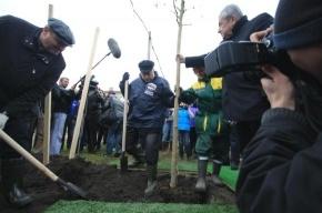 Георгий Полтавченко посадил клены в двух петербургских парках