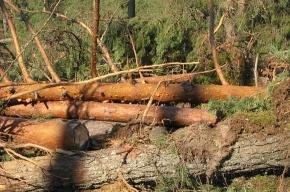 На Ваганьковском кладбище дерево придавило троих человек