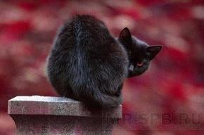 Черные коты и девушки с пустыми ведрами массово перейдут Невский проспект