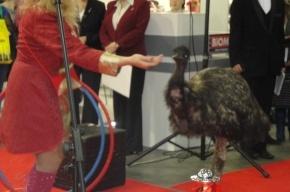 Выставка товаров и услуг для домашних животных открылась в Ленэкспо