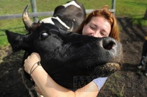 Дело  коровы Полины перенесено  в Кировский райсуд