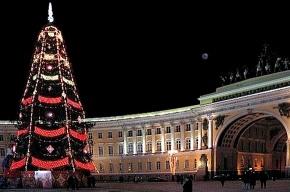 Горожане выбрали новогоднюю ель для Дворцовой