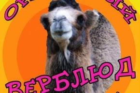 В Ленинградском зоопарке чествуют оранжевого верблюда