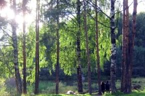 Защитники Ржевского лесопарка попросят помощи у Путина