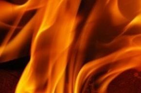 Пожарным не удается потушить свалку под Петербургом