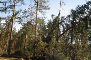 Из-за ветра  без света остались пять районов Ленинградской области