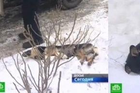 Собак убила «Фауна»