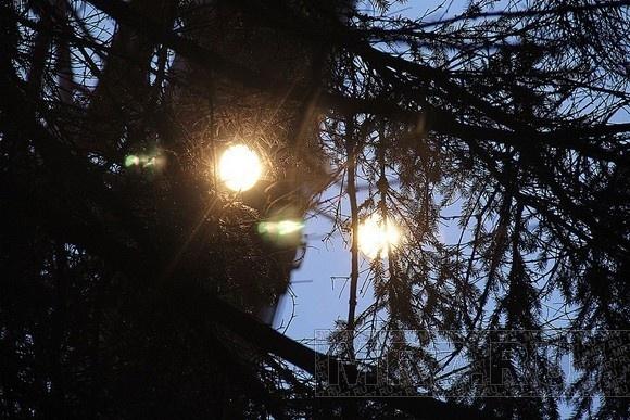 Главная ёлка Петербурга уже стоит на Дворцовой: Фото