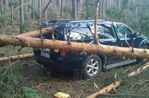 В Финляндии считают убытки от шторма