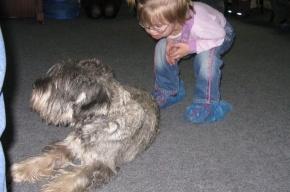 В Петербурге живут 22 собаки, которые лечат людей