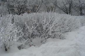 Холода  придут в Петербург только  в середине декабря