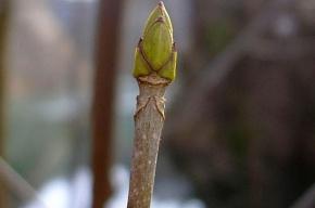 В Летнем саду началась весна