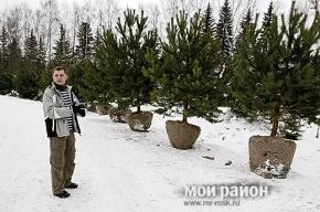 Где купить елку в Петербурге: 67 адресов