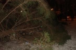 В Костроме трехметровая новогодняя ель рухнула на женщину с ребенком