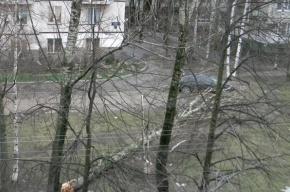 В Петербурге ветром сорвало кровлю собора и накренило главную елку