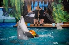 Москвичей порадовали открытием нового дельфинария