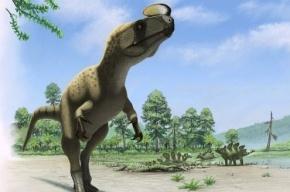 Петербургские палеонтологи открыли новый вид динозавра