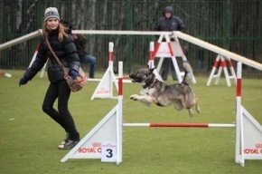 Дрессировочная площадка для собак появилсь в Калининском районе