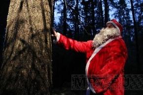 Главная елка страны моложе петербургской коллеги