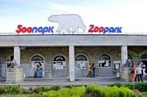 Звери в Ленинградском зоопарке страдают от теплой погоды