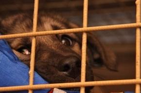 Бездомные животные в активном поиске: к вам едет «Веселый шарабанчик»