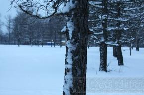 Жители Невского района второй раз выйдут на защиту «Яблоневого Сада»