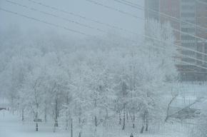 В Словакии под тяжестью снега  на детей рухнула крыша ледового дворца