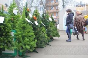 В Петербурге образовались свалки из брошенных елей