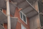 На углу Культуры и Просвещения с 25-го этажа кидали кирпичи: Фоторепортаж