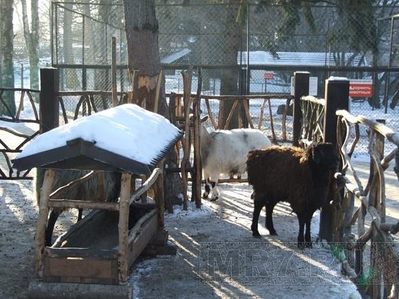 Морозы пока не уходят из Петербурга: Фото